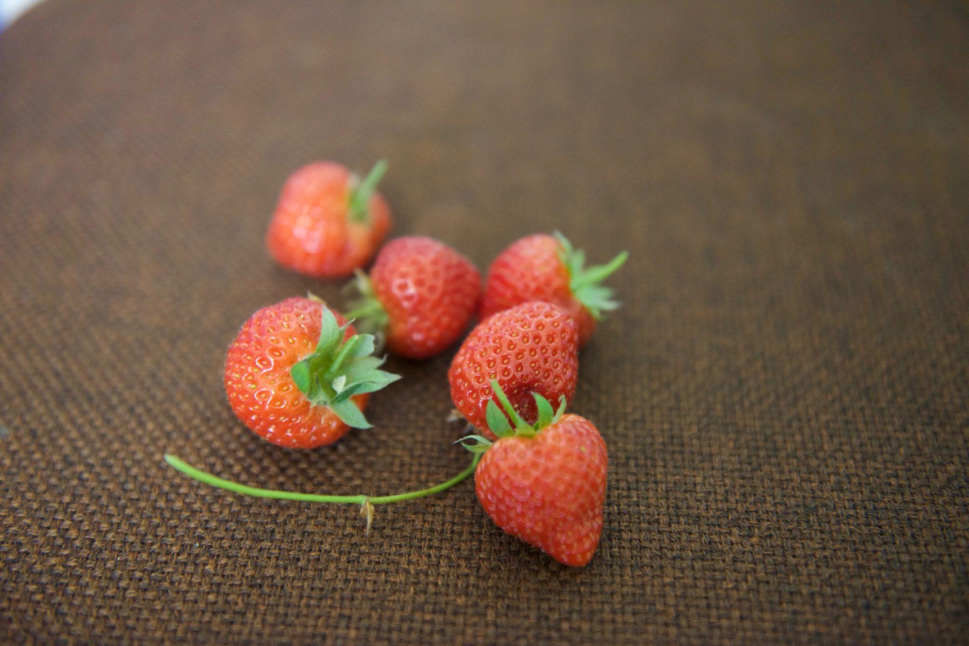 Detail na jahody ze skleníku Tuzemka 1.0